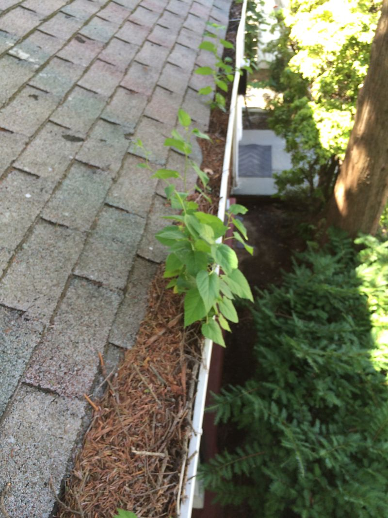 Gutter Cleaning Service - Click Image to Close